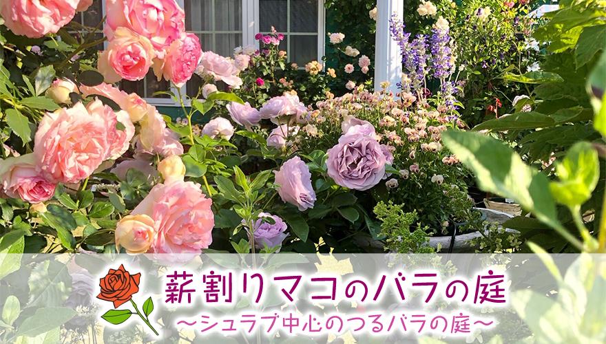"""薪割りマコのバラの庭~シュラブ中心のつるバラの庭~"""""""